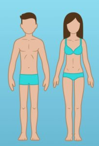 ektomorf vücut tipi