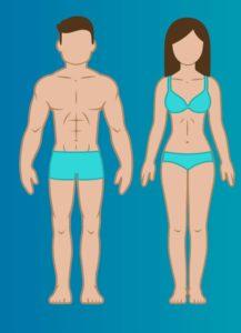mezomorf vücut tipleri
