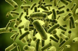 probiyotik bakteriler