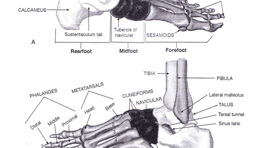 ayak bilegi sakatlikları